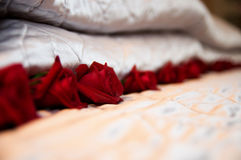 Bed Roses. A bed of arranged roses to set the mood Stock Photo