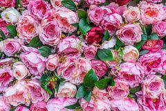 Bed of roses 2 Royalty Free Stock Images