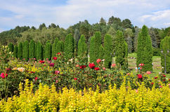 A bed of roses and cypress Avenue in the rose Valley. Kislovodsk resort Park. Kislovodsk resort Park is located at an altitude 800-1360 meters above sea level stock image