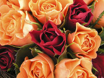 Bed of roses II. Closeup of abeautiful rose bouquet stock photos