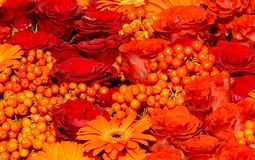 Bed of roses, rowanberry and gerberas Stock Images