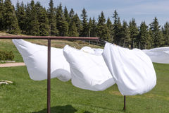 Bed sheet drying in the wind Royalty Free Stock Photos
