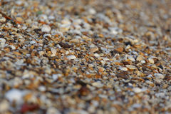 Bed of shells Royalty Free Stock Photography