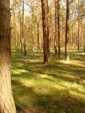 bed stammen för trees för treen för solskenet för fjädern för växter för blommaskoggreen Royaltyfria Foton