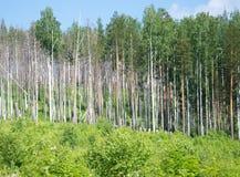bed stammen för trees för treen för solskenet för fjädern för växter för blommaskoggreen Gå bana i den blandade skogen arkivbilder