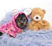Bed Time Puppy Royalty Free Stock Photos