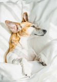 Bed time relaxed moments. Stock Photos