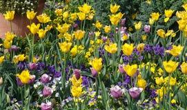 bed van bloemen Royalty-vrije Stock Afbeeldingen