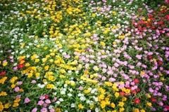 Bed van bloemen Royalty-vrije Stock Afbeelding