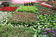 Bed van bloemen Stock Afbeeldingen