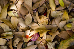 Bed van droge bladeren Royalty-vrije Stock Afbeelding