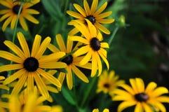 Bed van gele bloemen Royalty-vrije Stock Afbeeldingen