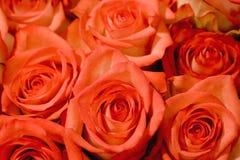 Bed van Roze Rozen Royalty-vrije Stock Afbeelding