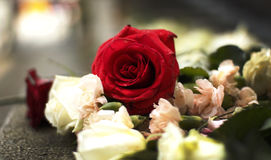 Bed van rozen in Oslo na verschrikkingsaanvallen Stock Foto's