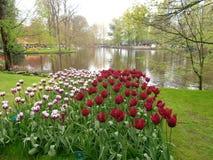 Bed van tulpen Royalty-vrije Stock Afbeelding