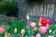 Bed van tulpen Stock Afbeelding