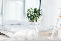 Bed in cozy bedroom. Bed with white bedding and green houseplant in cozy bedroom interior stock images