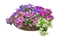 Free Bed With Petunia Royalty Free Stock Photo - 15035465
