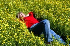 Bed of yellow flowers Royalty Free Stock Images