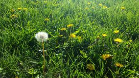 Bedarf, den Rasen zu mähen Stockfotos