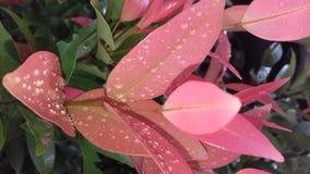 Bedauwde bladeren stock foto