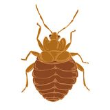 Bedbug Στοκ Φωτογραφίες
