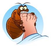 Bedbug bites Royalty Free Stock Photo