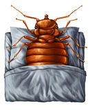 Bedbug Concept Stock Photos