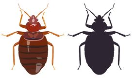 Bedbug and his black silhouette on white background. Vector illustration. Stock Images