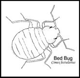Bedbug Illustrated Poster Royalty Free Stock Photography