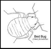 Bedbug Illustrated Poster. Illustrated bed bug, black outline on white background Royalty Free Stock Photography