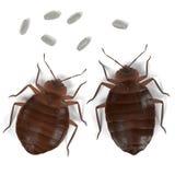 Bedbug set Royalty Free Stock Photo