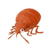 Bedbug Stock Photography