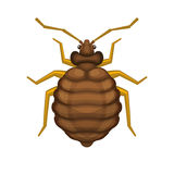 Bedbug on White Background. Vector Royalty Free Stock Photos