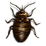 bedbugfärgillustration Arkivfoto