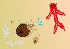 Bedbugs are searching for human host as its food. Illustration vector of begbugs attacking a human icon as blood vector illustration