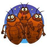 Bedbugs Stock Image
