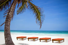 Bedchairs onder een palm op een strand Stock Foto's