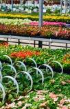 Beddegoedinstallaties voor tuinen Royalty-vrije Stock Foto's
