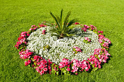Bedden van bloemen Stock Fotografie