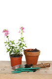 Bedding plant and tools Royalty Free Stock Photo