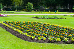 Bedding plants in a flower bed, early summer, UK Stock Photos