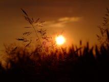 Bedecken Sie auf dem Hintergrund den Sonnenuntergang mit Gras Lizenzfreie Stockbilder