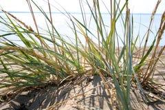 Bedecken Sie auf dem Strand II mit Gras Lizenzfreies Stockfoto
