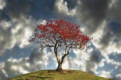 Bedecken Sie Baum mit Erde. Lizenzfreie Stockfotos
