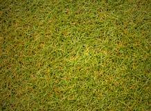 Bedecken Sie Beschaffenheit Golfplatz für Designmuster und -hintergrund mit Gras Stockfotos