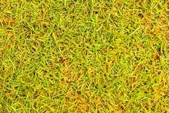 Bedecken Sie Beschaffenheit Golfplatz für Designmuster und -hintergrund mit Gras Stockfoto