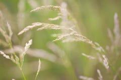 Bedecken Sie Blüten auf weichem grünem Nahaufnahmemakro des Hintergrundes draußen mit Gras Frühlingssommergrenzschablonen-Blumenh Stockfoto