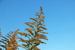 Bedecken Sie Blume auf gelber goldener Farbe mit blauem Himmel des Hintergrundes mit Gras Lizenzfreie Stockfotografie