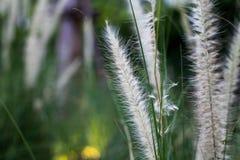Bedecken Sie Blume mit Gras Lizenzfreies Stockbild